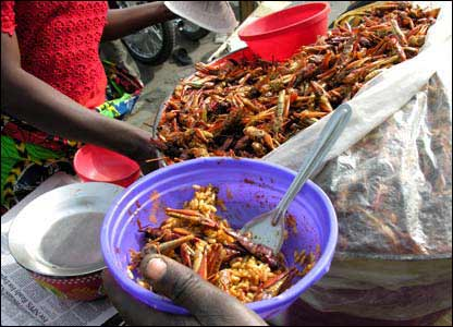 In Nigeria, Locust are called the Desert shrimp